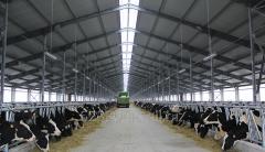 Производство свинины, говядины и молока