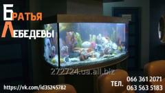 Обслуживание аквариумов от 150 грн.