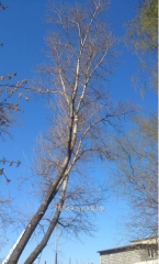 Removal of difficult trees