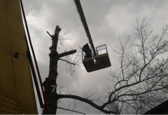 Cutting of trees from an autotower parts