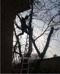 Cutting of garden trees.