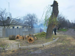 Saw cut of trees at the dacha