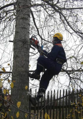 Saw cut of trees on the seasonal dacha