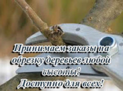 Cutting of fruit-trees, Bila Tserkva, cutting of