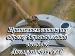Cutting of fruit-trees, Bila Tserkva, cutting of