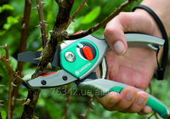 Cutting of bushes