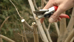 Spring cutting of trees and bushes