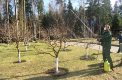 Spraying of garden trees