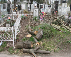Removal of trees on a cemetery