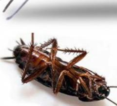 Служба по борьбе с тараканами и насекомыми. Николаев