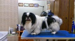 Hairstyle of the Japanese chin