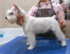 Trimming of wire-haired breeds