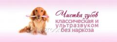 Toothbrushing by an animal