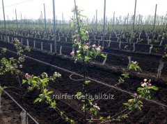 Design of long-term plantings