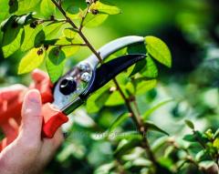 Услуга обрезки садов