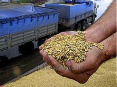 Przewóz kultur rolnych