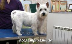 Hairstyle of dogs and cats, including dogs of