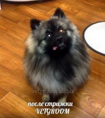 Veterinary consultation, veterinarian Kiev and