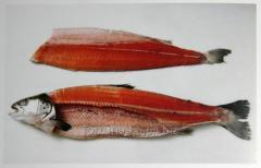 Трудоустройство в Польше Филетирование рыбы