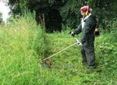 Трудоустройство в Польше Разнорабочие на кошение травы