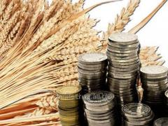Investments in agrarian industrial komples