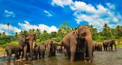 Авиабилеты в Шри Ланку!