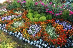 Висадження однолітніх квітів
