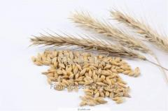 Services on seeds purchase