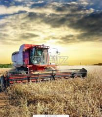 Экспорт агропродукции (зерновые, рапс, овощи) на