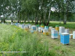 Опыление сельскохозяйственных культур пчелами