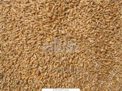 Переработка зерновых и пшеницы