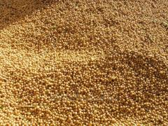 Services of storage of a corn on elevators