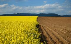 Покупка сельхозпредприятия
