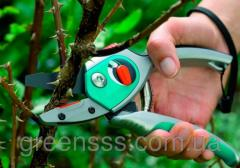 Pruning of gardens