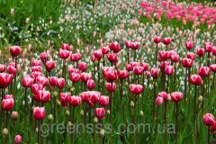 Формирование цветников