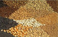 Закупка зерновых масленичных и бобовых  культур