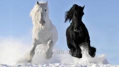 Фотосъемка на лошадях Love Story для двоих