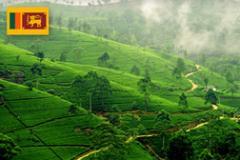 На Шри Ланку