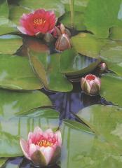 Подбор и посадка водных растений