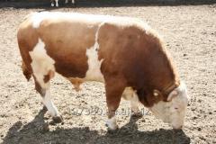 Покупка крупного рогатого скота