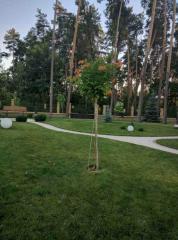 Planning of garden