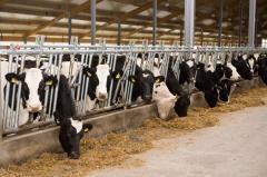 Бизнес план молочной товарной фермы
