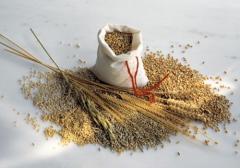 Услуга хранения зерновых культур