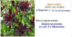 The Dacha exhibition, garden, the city in Kherson