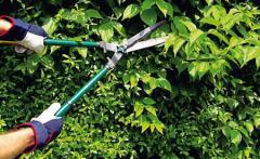 Sanitary pruning of trees