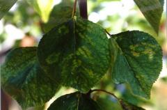 Caring for garden plants
