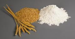 Переработка пшеницы в муку