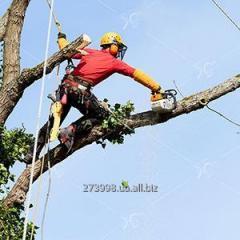 Обрежем дерево аккуратно, качественно.