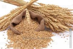 Визначення якості зерна та продуктів його переробки