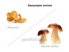 Грибы (белые грибы, лисички)